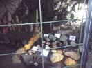 Jaskinia Wierzchowska_25