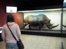 Muzeum Przyrodnicze_2
