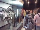 Muzeum Przyrodnicze_3